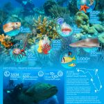 10 Great Spots For Snorkeling And Scuba Diving In Florida | Visit   Florida Wreck Diving Map