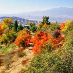 Best Places For California Autumn Leaves | Visit California   California Fall Color Map