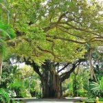 Coconut Grove   Wikipedia   Coconut Grove Florida Map