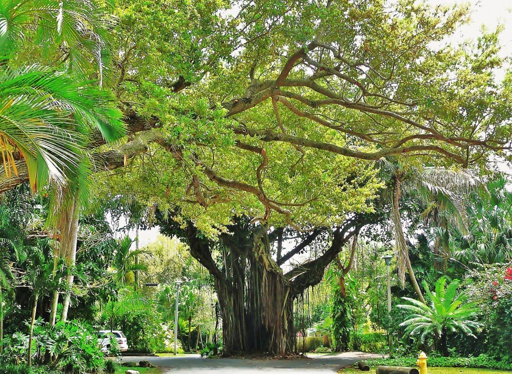 Coconut Grove - Wikipedia - Coconut Grove Florida Map