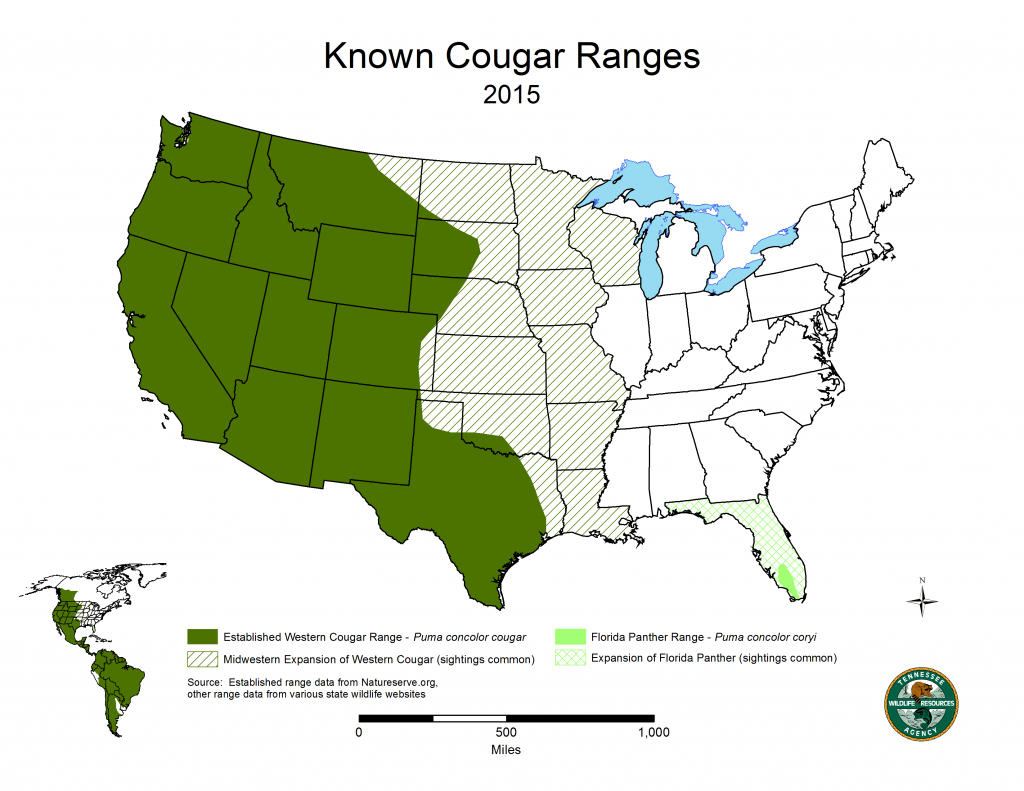 Cougars In Tennessee | State Of Tennessee, Wildlife Resources Agency - Mountain Lions In Texas Map