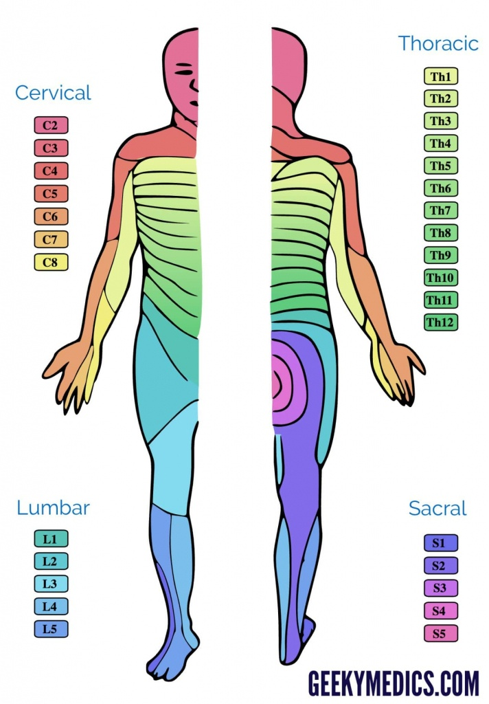 Dermatomes And Myotomes | Anatomy | Geeky Medics - Printable Dermatome Map