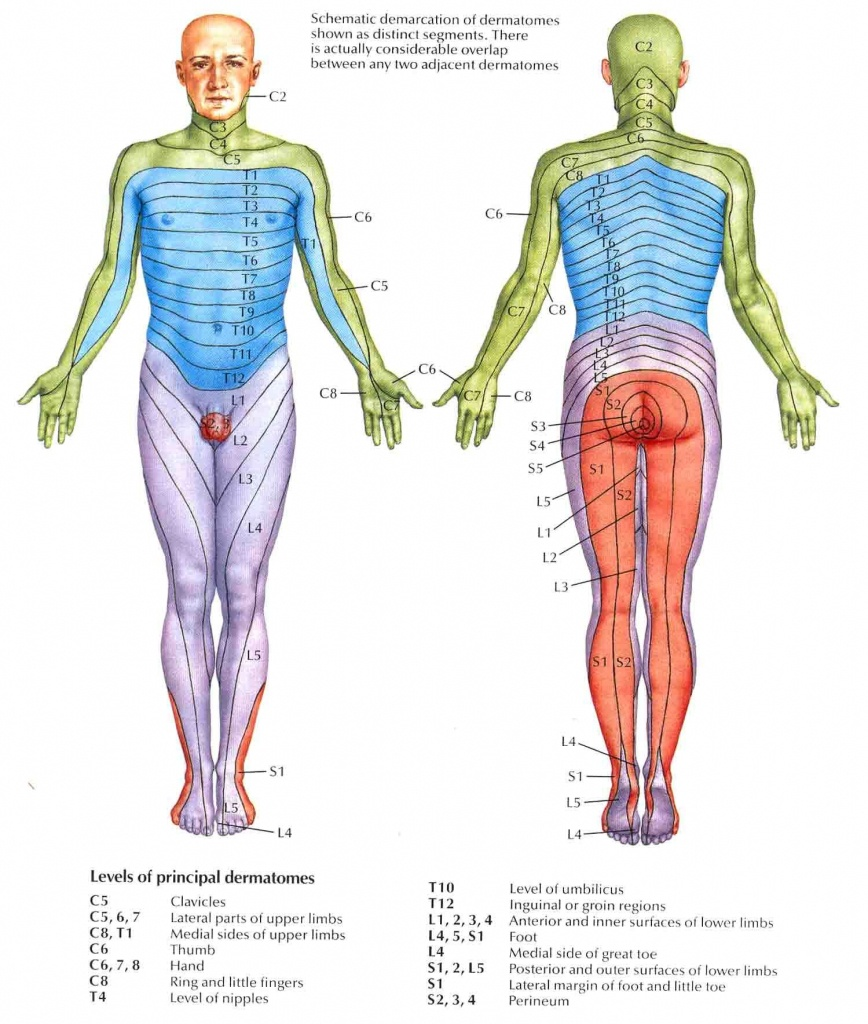 Dermatomes | Nclex | Radiculopathy, Occupational Therapy, Spinal Nerve - Printable Dermatome Map