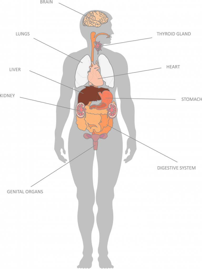 Having Map Of Internal Organs To Understand Human Body | Anatomy Of - Printable Body Maps