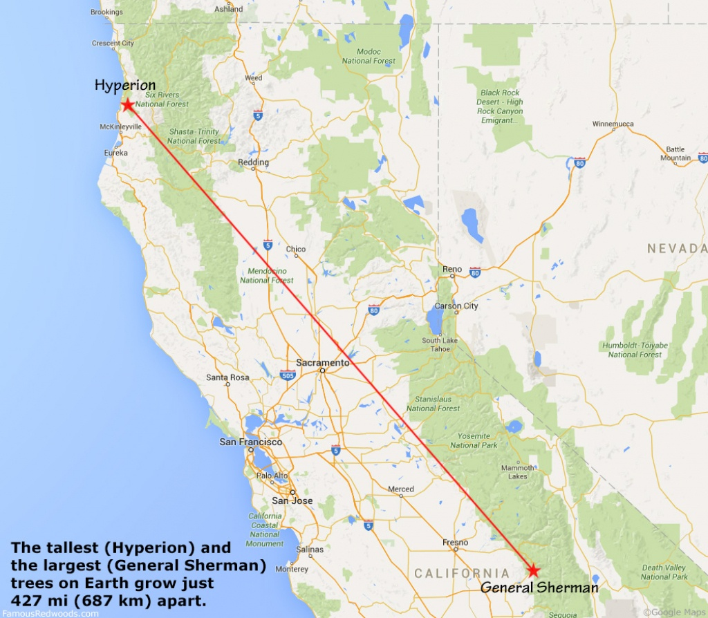 Hyperion Tree - Famous Redwoods - Giant Redwood Trees California Map