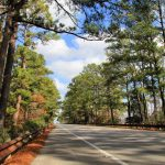 Lost Pines Forest   Wikipedia   Lost Pines Texas Map