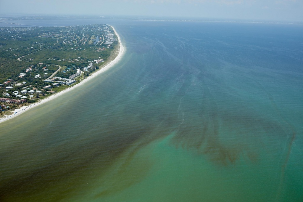 Red Tide Is Devastating Florida's Sea Life. Are Humans To Blame? - Current Red Tide Map Florida