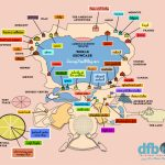 The Disney Food Blog 2018 Epcot Food And Wine Festival Map!   The   Epcot Park Map Printable