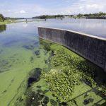 Toxic Blue Green Algae Plagues South Florida's Waterways; Governor   Toxic Algae In Florida Map