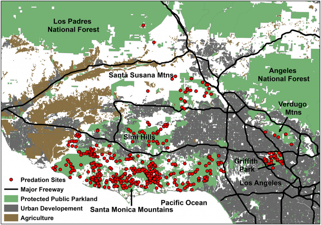 Where Do Mountain Lions Hunt In Los Angeles? - The Verge - Mountain Lions In California Map